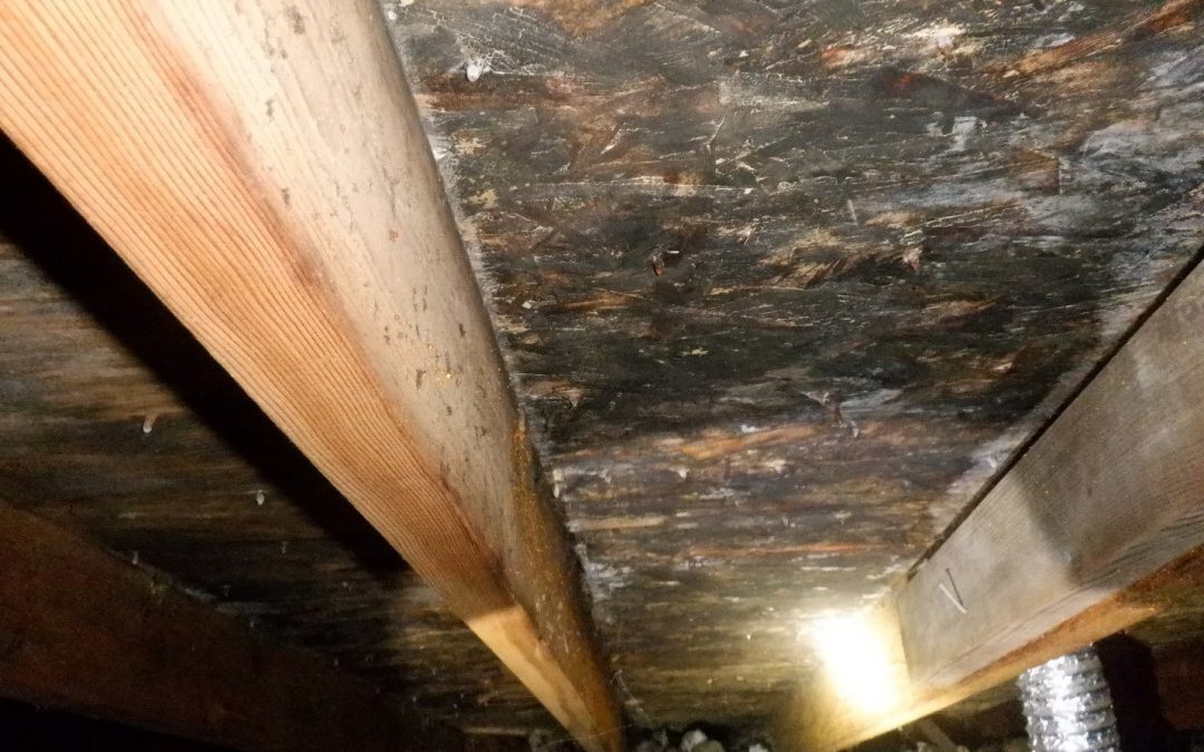 Your inspector found mold in the attic at the underside of the roof decking (sheathing) and trusses. What now?
